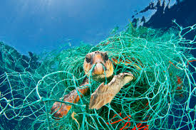 bycatch turtle